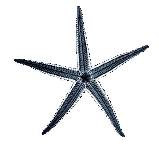 Starfish_Roentgen_X-Ray_01_Nevit